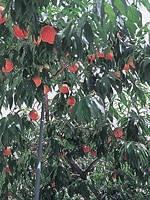 紺野果樹園・写真