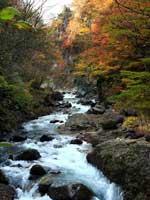雪割橋の紅葉・写真
