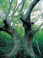 ケヤキの森 散策路・写真