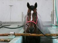 日本中央競馬会 競走馬総合研究所常磐支所・写真
