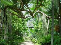 国立科学博物館筑波実験植物園(つくば植物園)・写真