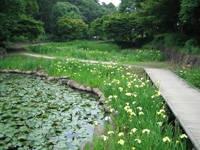 水生植物園・写真