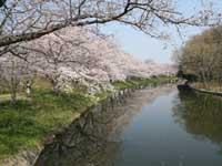 福岡堰・写真