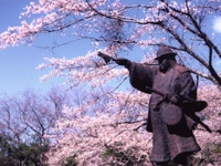 佐白山麓公園の桜