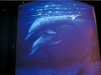 キングハム・3Dメルヘン水族館・写真
