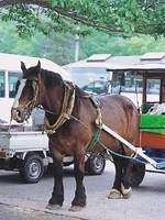 観光トテ馬車・写真