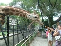 宇都宮動物園・写真