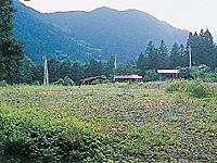 山の神バンガロー