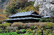 Edo Meiji