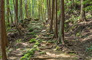 Kumano Kodo ancient pilgrimage routes
