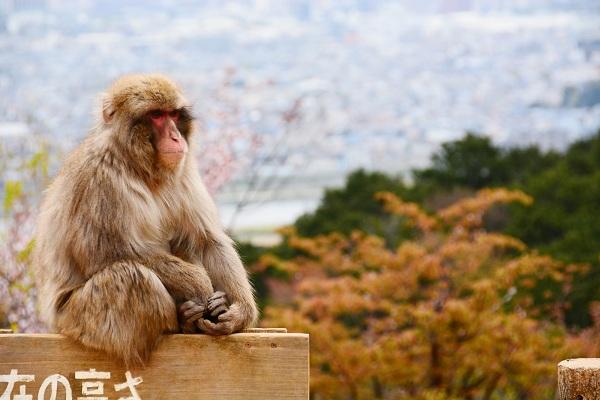 La montagne des singes d'Arashiyama