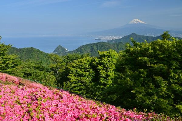 Azalea: Mount Katsuragi Azalea Festival