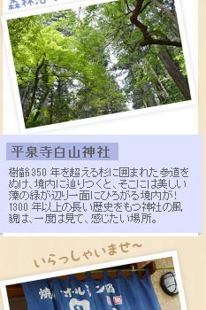 平泉寺白山神社 樹齢350年を超える杉に囲まれた参道をぬけ、境内に辿りつくと、そこには美しい藻の緑が辺り一面にひろがる境内が!1300年以上の長い歴史をもつ神社の風貌は、一度は見て、感じたい場所。◆平泉寺白山神社 TEL:0779-88-8117