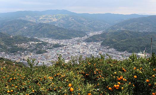 ④みかん山から見る風景〜愛媛県八幡浜市〜