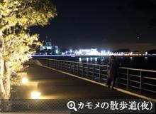 カモメの散歩道(夜)