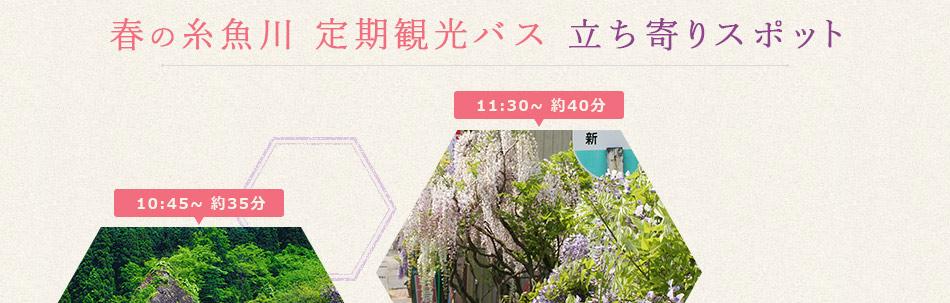 春の糸魚川 定期観光バス 立ち寄りスポット