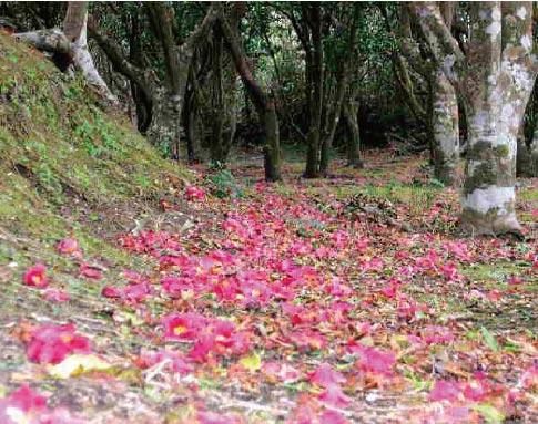 利島の山歩き