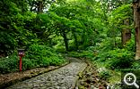 【大山】大神山神社へと続く長い石畳の参道