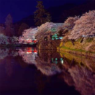 水面に映る夜桜・・目の前が桜尽くし!美しい!!