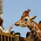 アドベンチャーランドには、パンダだけじゃない! イルカやペンギン、ライオンにキリンなどなどたくさんの動物がいます。