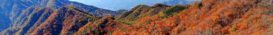 山梨の秋をレンタカーでもっと楽しもう!