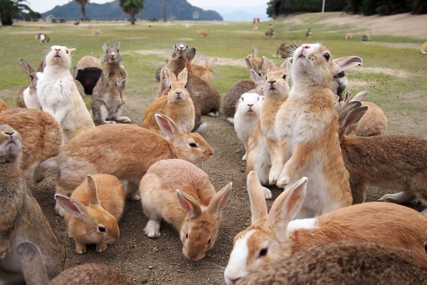 大久野島-ウサギの楽園
