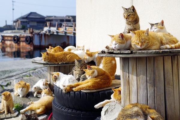 青島-猫の島