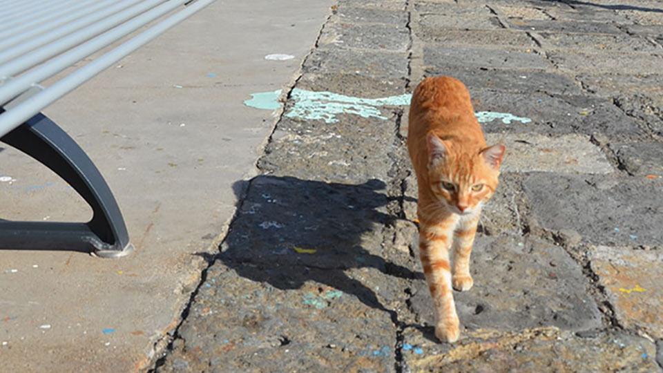"""世界の""""猫と出会える"""" 旅作家オススメの街"""