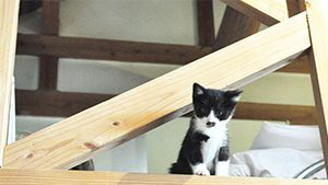 The Cutest Cats of Hotels and Ryokan in Japan