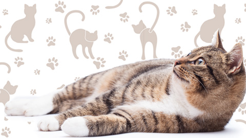 【2017年版】全国の宿 自慢の看板猫ランキング