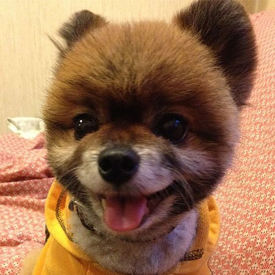 R sultats du sondage les chiens les plus mignons des for Hotels qui acceptent les chiens