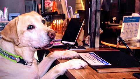 集計中!全国の宿 自慢の「看板犬ランキング」