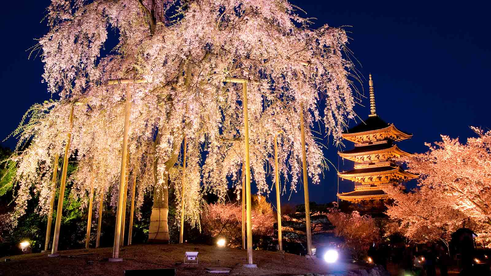 10 Places in Kyoto to see cherry blossoms this spring