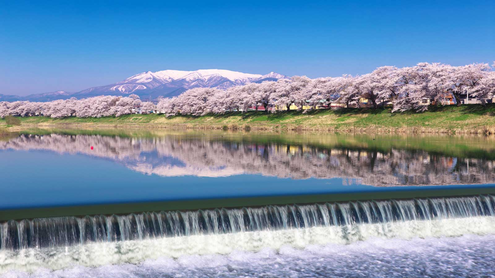 Tohoku Sakura Dream Road 21 Of The Best Cherry Blossom Spots In