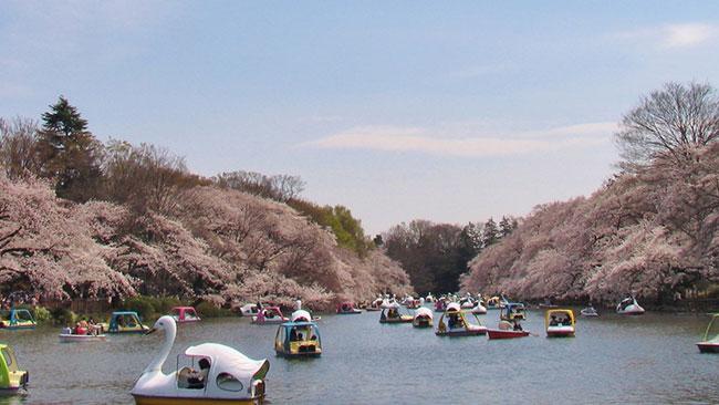 Negara Jepang Yang Menakjubkan