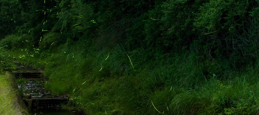 鳥川螢火蟲之鄉
