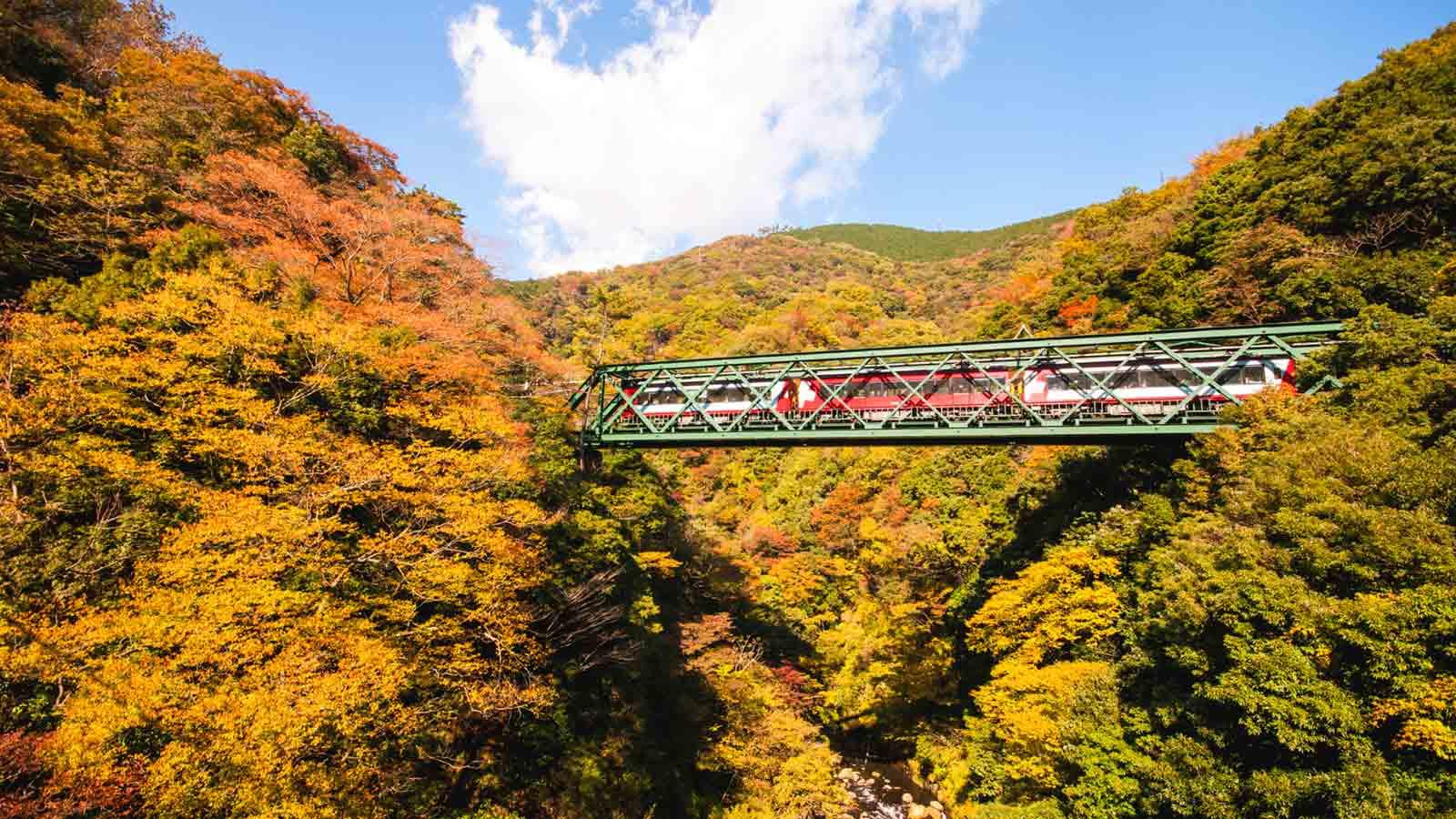 Hakone: Rekomendasi Tempat-tempat Populer untuk Menyaksikan Momiji