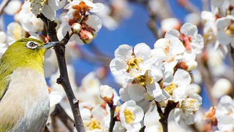 一足早く春を感じる旅へ。おすすめ梅の名所33選