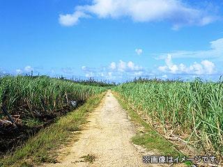 沖縄の画像 p1_3