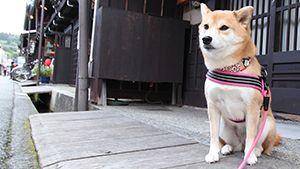 全国の宿 自慢の「看板犬ランキング」