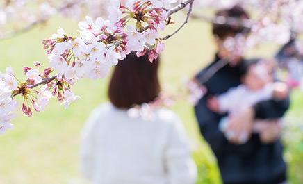 春満開!桜の名所に近い宿