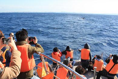 クジラを見つけるまでのドキドキ感もたまりません。