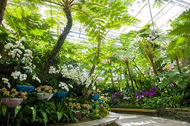 2月には沖縄国際洋蘭博覧会も開催される熱帯ドリームセンター。