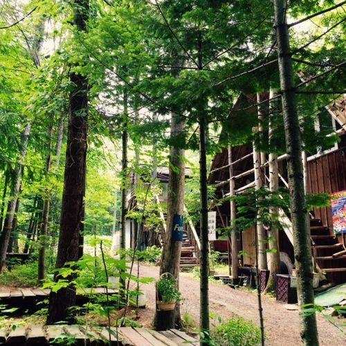 森林コテージ ログ由縁