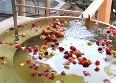 Women's Open Air Rose Bath