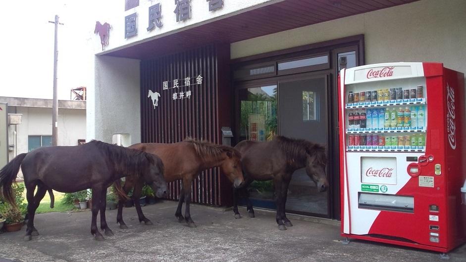 都井岬 国民宿舎