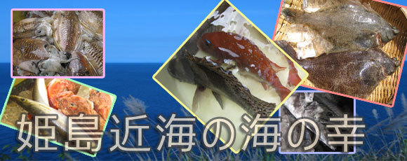 姫島近海の魚