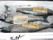 【現金特価】出羽庄内 春の味覚満喫ぷらん エコノミーコース