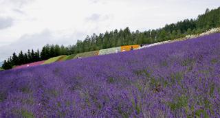 2011.7.23 Farm Tomita