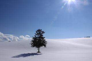 冬の富良野・美瑛 10